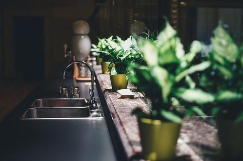 Så tar du bäst hand om dina växter